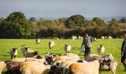 £300,000 Available for Rural Projects from The Prince's Countryside Fund