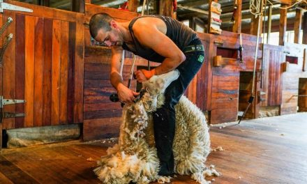 CAN-AM SUPPORTS OXFORDSHIRE FARMER IN ATTEMPT AT NINE-HOUR BRITISH LAMB SHEARING RECORD