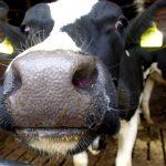 New funding to support dairy farmers through coronavirus