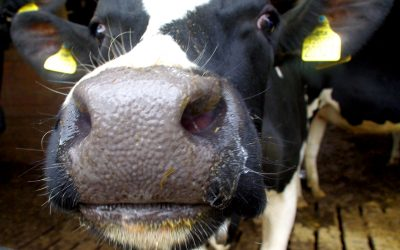 New funding to support dairy farmers through coronavirus